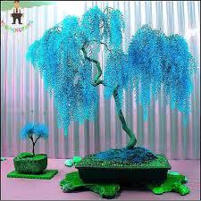 sale 50pcs sky blue willow seeds perennial flower