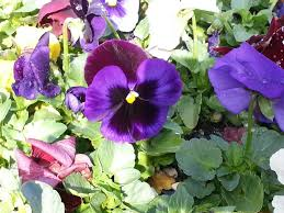 types of purple types of purple flowers names fllory