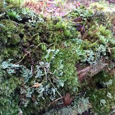 winter u0027s textures moss bark and debris u2013 susan rushton