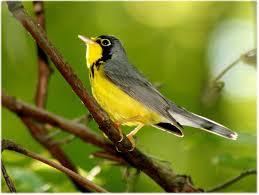 Maryland birds images Important bird areas audubon maryland dc jpg