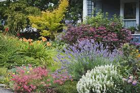 pretty container gardening caladius and impatiens shade plantslow