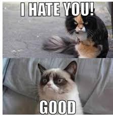 Stupid Cat Meme - stupid cat funny pinterest cat and funny animal