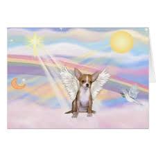 chihuahua rainbow bridge cards greeting photo cards zazzle