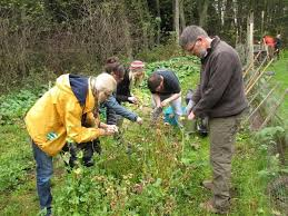 winterizing the garden with leaf u2013 whidbey institute
