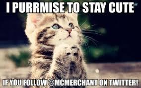 Cute Kittens Meme - 6 cute kitten memes that will make you go follow mcmerchant on