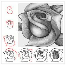 how to sketch a rose step by step art pinterest sketches