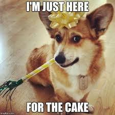 Birthday Cake Dog Meme - elegant happy birthday dog meme best 25 happy birthday dog meme