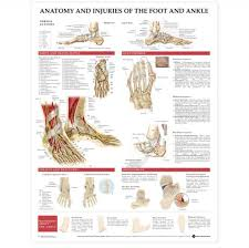 Ankle Anatomy Ligaments Ankle Bone Structure Diagram Anatomy Chart Body