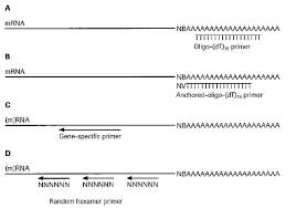 reverse transcription technology