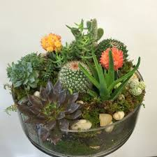 succulent arrangements succulent cactus garden in boston ma same day delivery