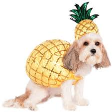 costumes for dogs 85 best dog costumes images on dog costumes