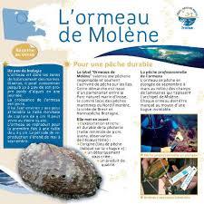 cuisiner des ormeaux présentation et recette de l ormeau de molène documentation parc