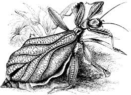 free printable drawings of insects 53 for free coloring book with