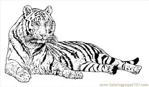 free tiger coloring pages coloring