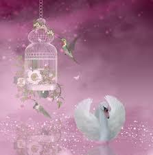 swan and hummingbird fantasy art free stock photo public domain