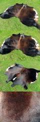 safavieh cowhide rugs leather fur and sheepskin rugs luxury black white cowhide rug