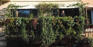 winterharte pflanzen balkon balkon sichtschutz winterharte pflanzen