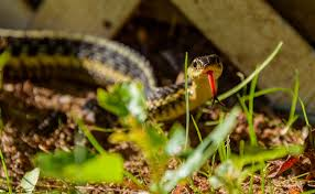 Found A Snake In My Backyard What To Do If You See A Snake In Your Backyard Care2 Healthy Living