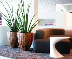 live vs artificial plants which are the best for your office or