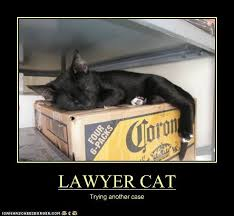 Lawyer Cat Meme - lawyer cat trying another case lawyer humor pinterest lawyer