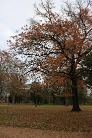 Kyneton Botanical Gardens Through My Kyneton Botanical Gardens Ordinary