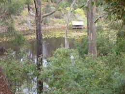 the view of the billabong from the treehouse cabin picture of