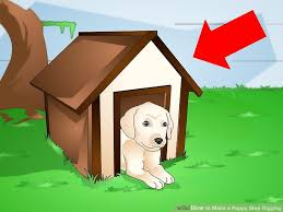 3 ways to make a puppy stop digging wikihow