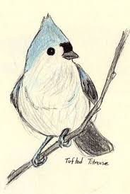 songbird coloring pages birds to draw pinterest doodle