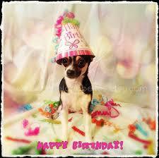 chihuahua birthday card chihuahua card terrific