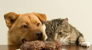 alimentazione casalinga gatto e meglio nutrire cani e gatti con crocchette o con cibo fatto in