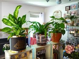 Wohnzimmer Pflanzen Ideen Wohnzimmer Pflanzen Design 05 Wohnung Ideen