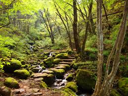 Rock Garden Tour by Self Guided Tour Hiking Mt Mitake U0027s Rock Garden