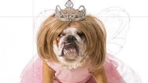 dog costumes halloween cuteness overload the san diego union
