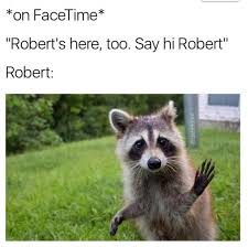 Racoon Meme - rob is a raccoon meme nlsscirclejerk
