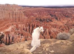 Utah travelling images The photo adventures of a dog and his human traveling around usa jpg