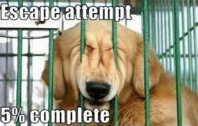 Cat And Dog Memes - hilarious cat dog memes enlightenment
