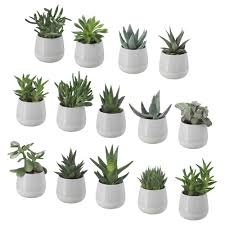 succulent plant with pot ikea