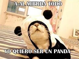 Memes De Pandas - anime meme en español buscar con google meme pinterest memes