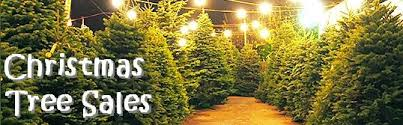 of catholic parish chicago christmas tree sale