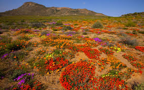 South African Wild Flowers - things not to miss in south africa photo gallery rough guides