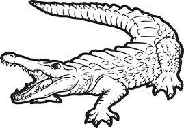 alligator coloring alligator coloring easily alligator