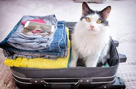 Traveling With Pets images Traveling with pets the tips and tricks you need to know your jpg