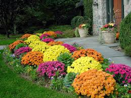 Winter Flowers For Garden by 28 Fall Garden Planting Flowers For Fall And Winter Fall