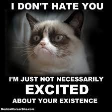 Grumpy Cat Meme Valentines Day - image result for grumpy cat meme excited adorable cats pinterest