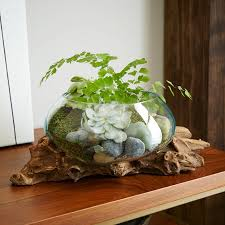 wood glass terrariums west elm