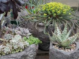 rock garden ideas discussion also succulent rock garden plants