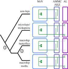co option of histaminergic interneurons proceedings of the royal