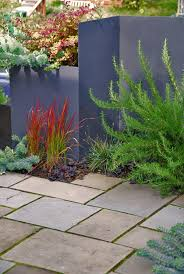 landscaping with ornamental japanese blood grass