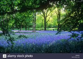 Prospect Park Botanical Garden Bluebells In Botanic Gardens Prospect Park New
