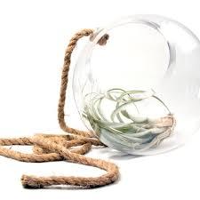 glass terrarium chive products llc
